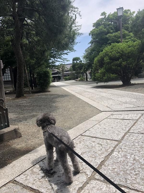 円覚寺境内の画像