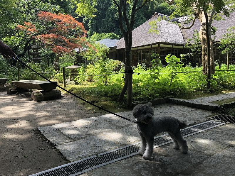 浄智寺の画像
