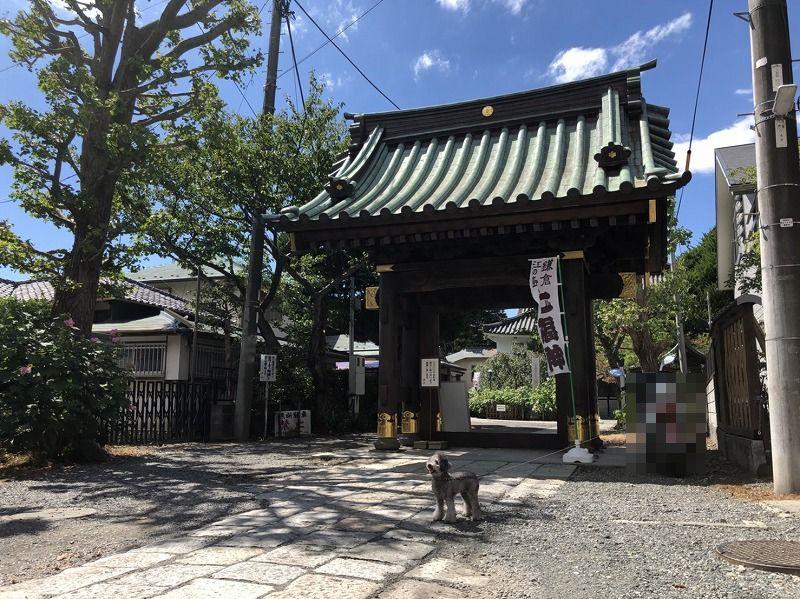 妙隆寺の入り口の画像